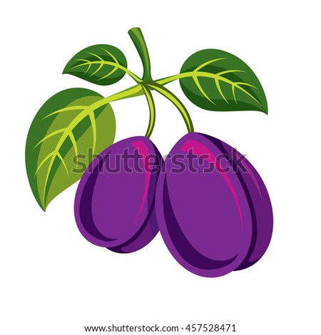 Two purple simple plums with green leaves, ripe sweet fruits illustration. Healthy and organic food, harvest season symbol.  - stock photo