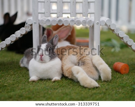 two rabbit rest on garden.