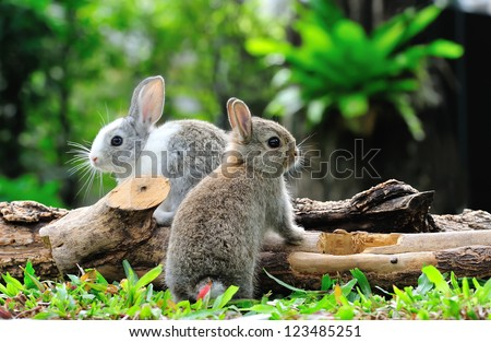 Two rabbits bunny in the garden - stock photo