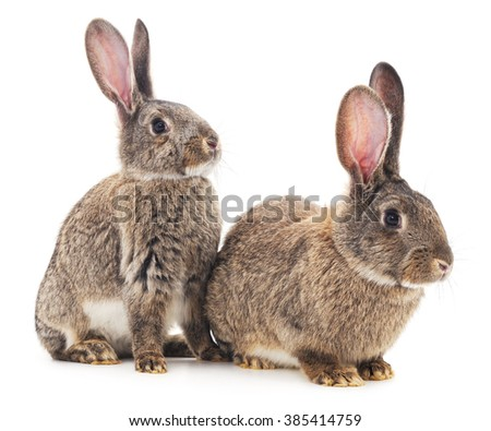 Two rabbits isolated on a white background.