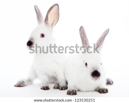 Two rabbits  on a white background - stock photo