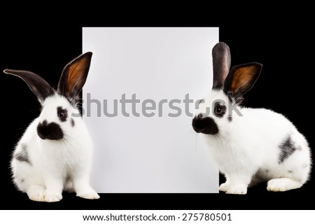 Two rabbits with a sheet for text isolated on black background - stock photo