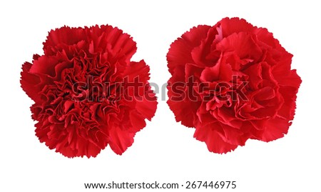 Two red carnation flower heads isolated on white background - stock photo