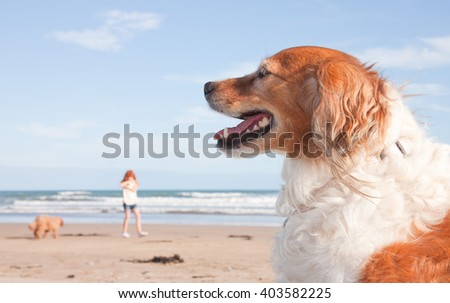 two red haired dogs on a beach with a young redhead girl in the background - stock photo
