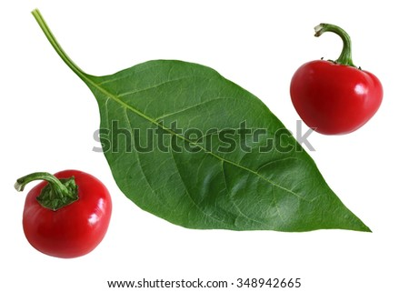 Two red hot cherry pepper fruits and green leaf - stock photo