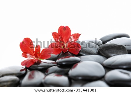 Two red orchid on zen b stones  - stock photo