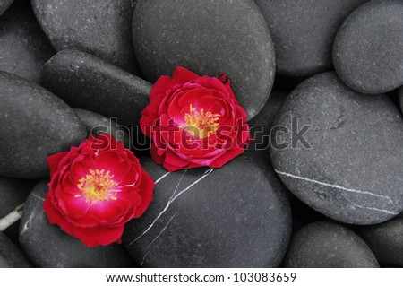 Two red rose on beach pebbles texture - stock photo