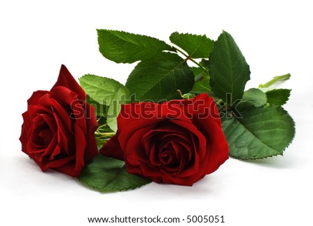 Two red roses on white. File includes clipping path.