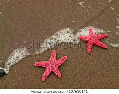 Two Red Starfish on the Shoreline with Waves