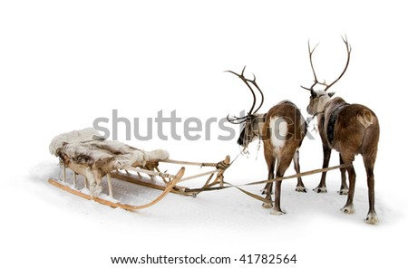 Two reindeers stand to harnesses in winter. - stock photo