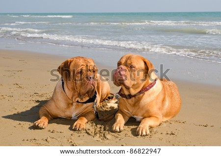 Two relaxed dogs lying at the beach - stock photo