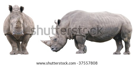 Two rhinoceros isolated on white background without shadows. Front and side views. - stock photo
