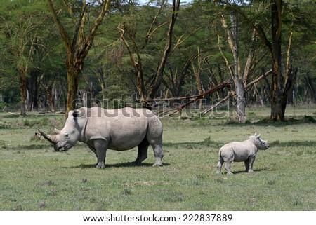 Two rhinos in the wild in Kenya - stock photo
