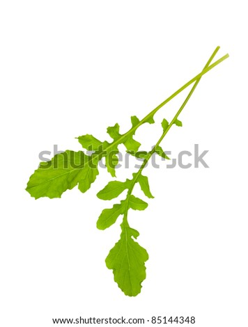 Two rocket leaves isolated on white - stock photo