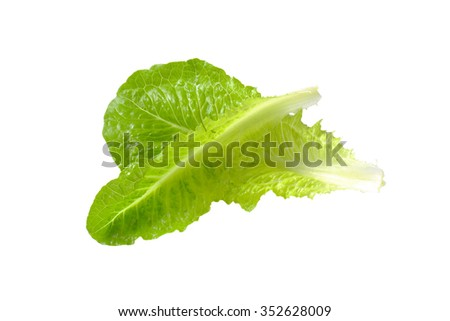 two romaine lettuce leaves isolated on white - stock photo