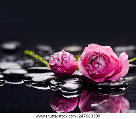 Two rose and wet stones - stock photo