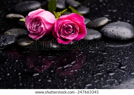 Two rose with pebbles and green leaf on wet background - stock photo