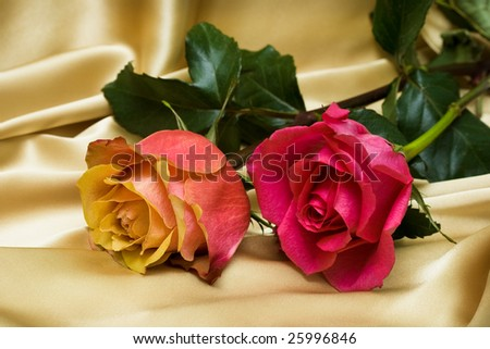 two roses on yellow silk - stock photo