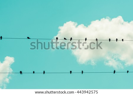 Two rows of birds resting on wires.
