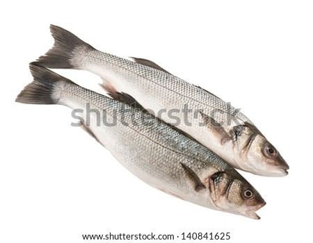 Two Sea bass isolated on white