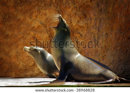 Two Sea Lions in a zoo show against a rocky background - stock photo