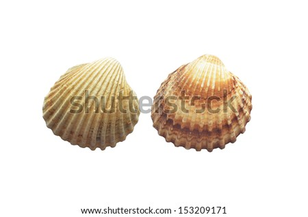Two sea shells isolated or a white background. Seashell - stock photo