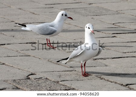 Two seagull from Venice, Italy - stock photo