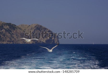 Two seagulls flying by the steep cliffs of Cape Formentor, Majorca, Balearic islands, Spain. Sailboat in the distance.  - stock photo