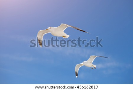 Two seagulls flying in blue sky - stock photo