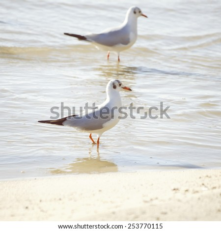Two Seagulls in Sea Water Summertime - stock photo