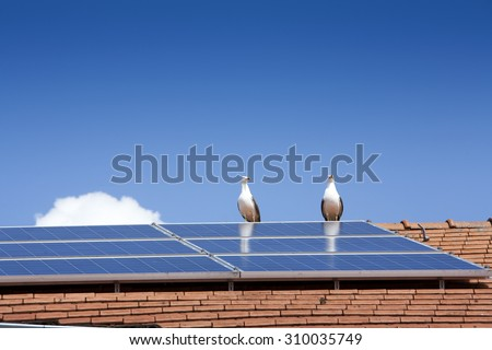 Two seagulls near a solar panel on a roof