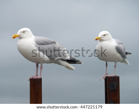 Two seagulls perched on top of a rusty ladder, Falmouth Cornwall England. - stock photo
