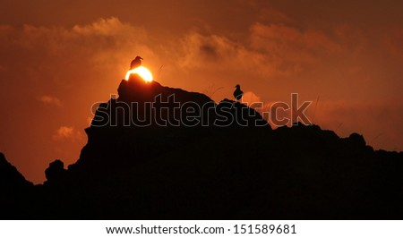 Two seagulls silhouetted against sunrise