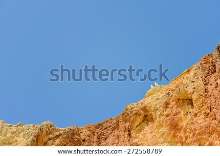 Two seagulls sitting on orange cliff top over blue sky - stock photo