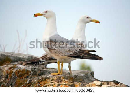 Two seagulls turned opposed of each other looking at camera on the wall of the road on top of the hill above Gibraltar. Two seagulls on the wall . - stock photo