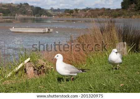 two seagulls waiting on the grass beside a harbour side diner in the hope of getting scraps - stock photo
