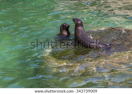 Two seals on a rock - stock photo