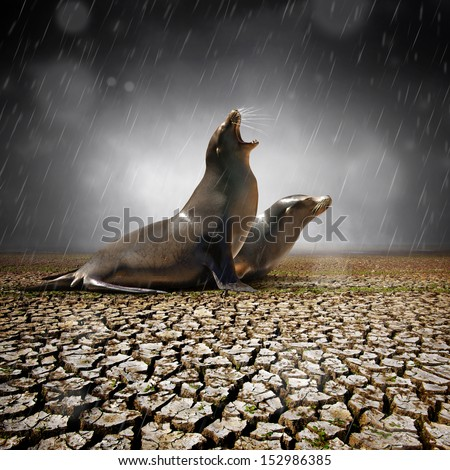 Two seals under heavy rain feeling relief after a severe drought - stock photo