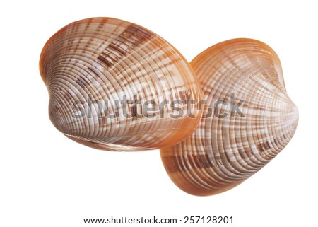 Two Seashells Isolated on White Background - stock photo