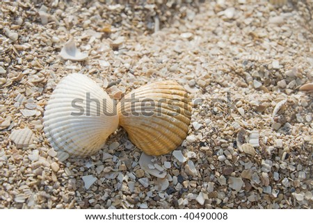 Two seashells on a sand beach, romantic concept