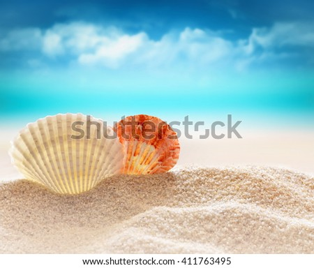 Two Seashells  on the sandy beach  at ocean background. Summer beach. - stock photo