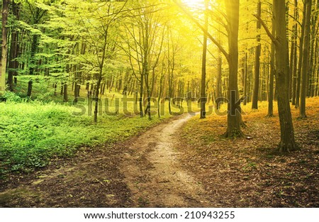Two seasons in the forest  - stock photo