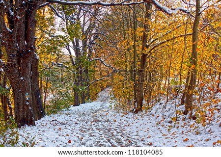 Two seasons - winter and autumn scene in the park