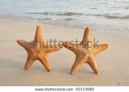 two seastars sitting on beach - stock photo