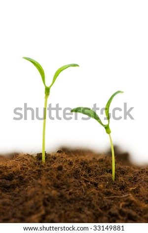Two seedlings illustrating the concept of new life