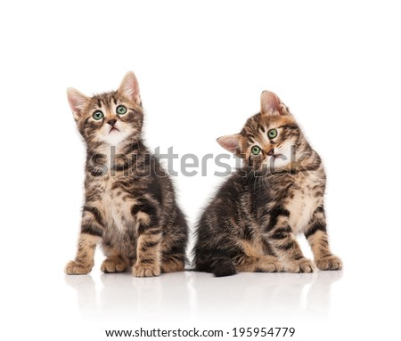 Two serious cute kittens isolated on white background cutout