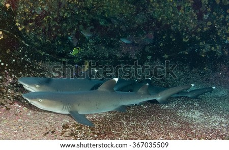 Two sharks in South Afrfica - stock photo