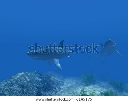 Two sharks under water on a background of the blur foreground
