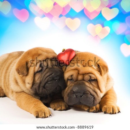 Two sharpei puppies in love - stock photo