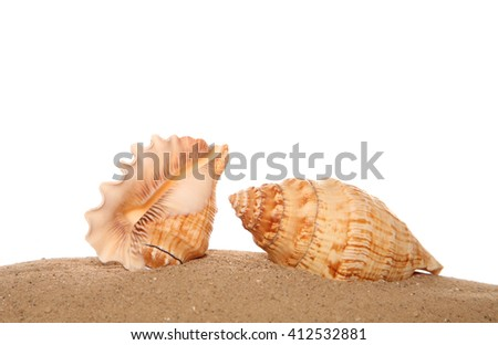 two shells on sand studio cutout